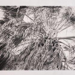 Ruane_C_Elder_.52x84_charcoal_graphite_1
